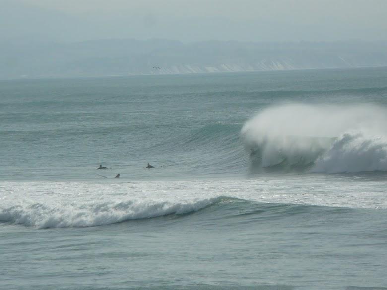 surftrip houle solide à la Côte des Basques